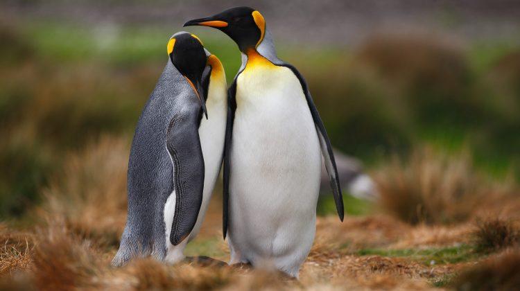 Homosexualidad en animales