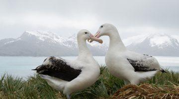 bisexualidad en animales