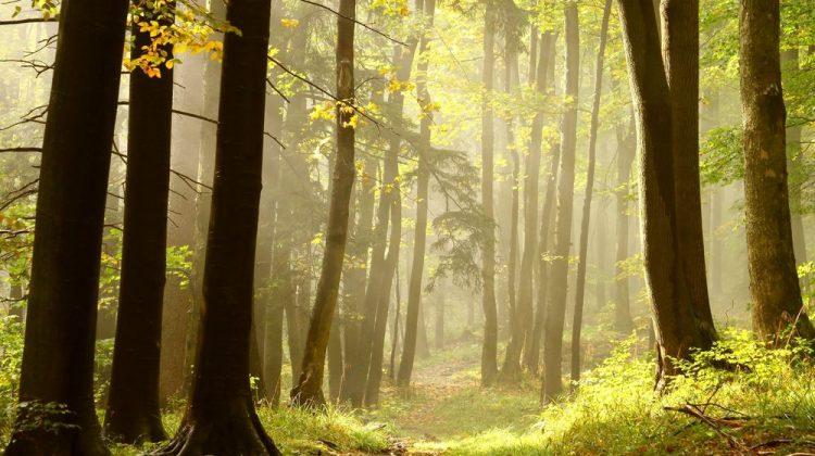 escapada de otoño